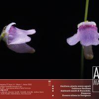 AIPCMagazine 1/2020