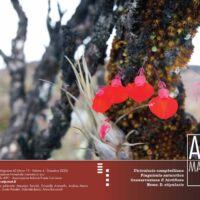 AIPCMagazine 4/2020