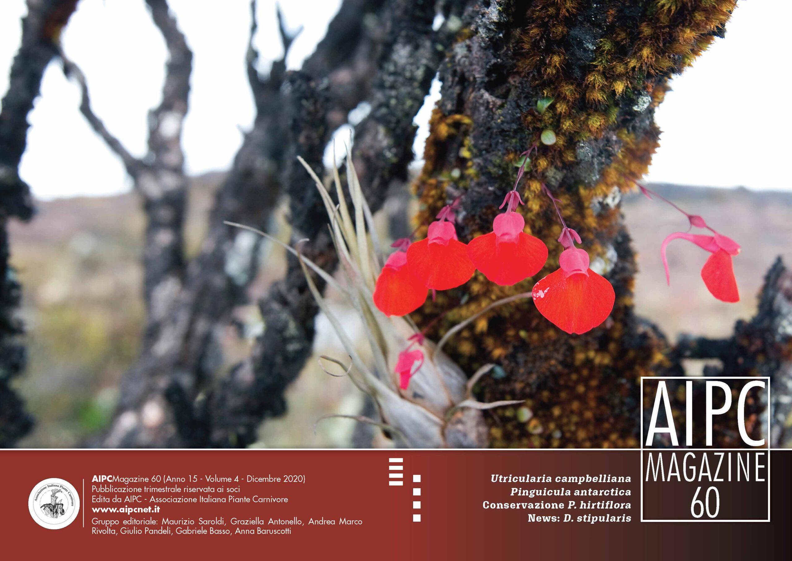 AIPCMagazine_Cover60