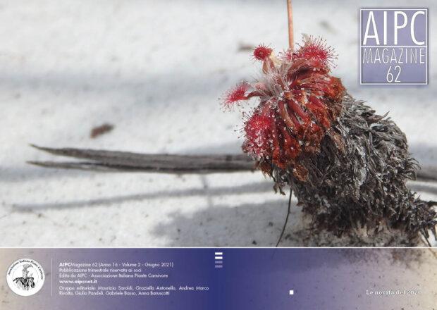 AIPCMagazine 2/2021